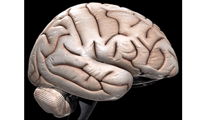 Brain Tuned